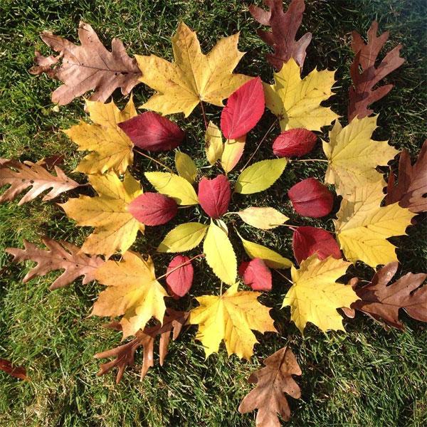 chicago-leaves