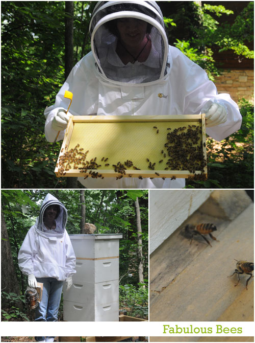 Eye of the St Louis web designer: Bees
